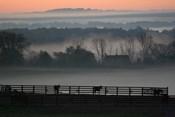 Horse Farm Rose Dawn