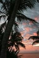 Palm Sunrise Vertical
