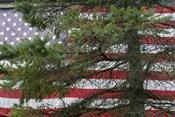 Pine Flag Barn