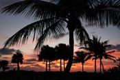 Pre Dawn Tropical Trees