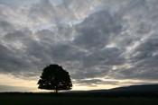 Sunset Silhouette Tree