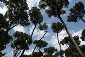 Tuscan Trees Clouds