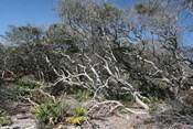 Windblown Shore Trees