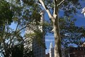 Flatiron Building With Trees