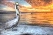 Pelican And Fire Sky