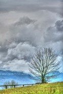 BC Bare Tree Vertical