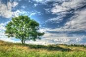 Cornwall Tree