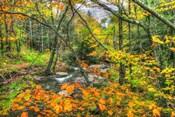 Fall Brook Orange Fo