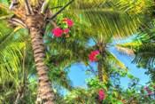 Key West Pink Flowers Palm