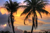 Key West Two Palm Sunrise