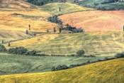 Tuscan Field Patterns
