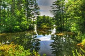 Pond and Pines