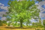 Robibbero Tree