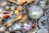 Shells V
