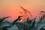 Sunset Gull and Fronds