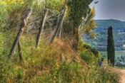 Tuscan Cedar and Fence
