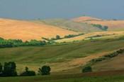 Tuscan Hill I