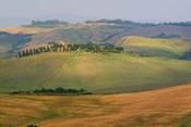 Tuscan Hill Sheep