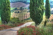 Tuscan Red Flower Road