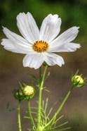 White Flower Vertical