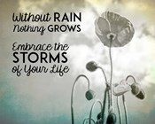 Without Rain Nothing Grows Black and White