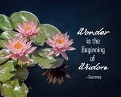 Wonder is the Beginning of Wisdom Water Lily Color