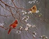 Spring Glory