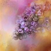 Sun On The Lilacs