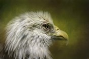Bald Eagle In The Grove