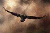 Juvenile Bald Eagle In The Sepia Sky