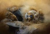 Lion Love 2