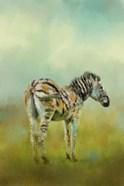 Summer Zebra 1