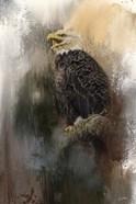 Winter Eagle 3