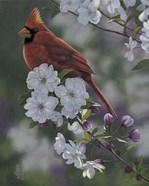 Cardinal Spring Blossoms