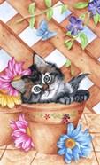 Trellis Kitty