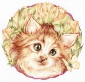Tulip Kitten