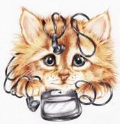 Wired Kitten