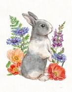 Sunny Bunny IV FB