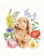 Sunny Bunny I FB