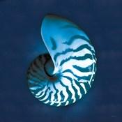 Cyanotype Sea I