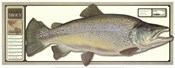 World Record Brown Trout