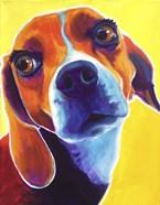 Beagle - Marcie