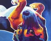 Beagle - Roxy