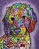 Sweet Poodle