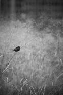 Urban Meadow