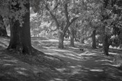 Middleton Place 3 B&W, SC