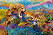 Pride Fight in the Savanna - African Lions