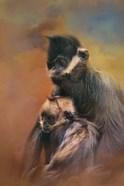 Mom And Baby Francois Langur