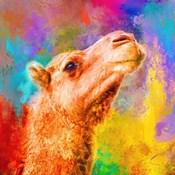 Jazzy Camel