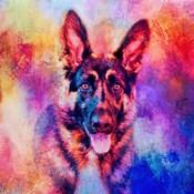 Jazzy German Shepherd